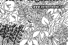 DRCC-Colouring-Page-2