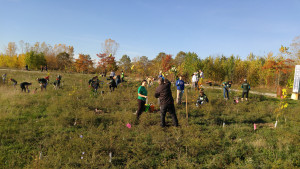 TD Tree Day Volunteers Planting 3