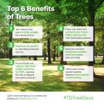 Benefits of Trees