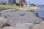 DR-Shoreline-Windsor-